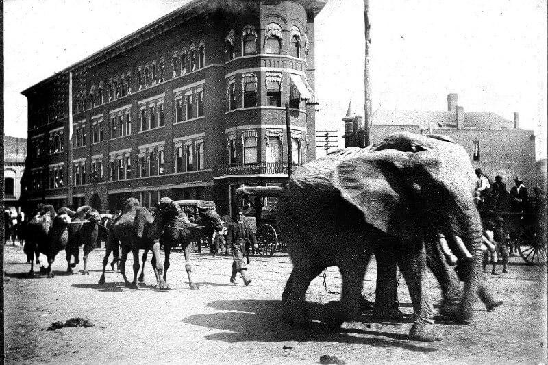 old_elephant_street